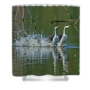 Clarks Grebes Dancing Shower Curtain