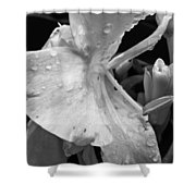 Classic Beauty Shower Curtain