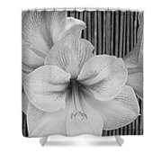 Classic Lilies Shower Curtain