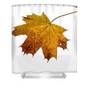 Claws Of The Autumn - Featured 3 Shower Curtain