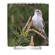 Clay-coloured Sparrow Pictures 35 Shower Curtain