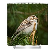 Clay-coloured Sparrow Pictures 50 Shower Curtain