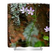 Claytonia And Rust Shower Curtain