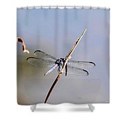 Clear-winged Dragonfly Shower Curtain