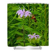 Clear-winged Hummingbird Moth Shower Curtain
