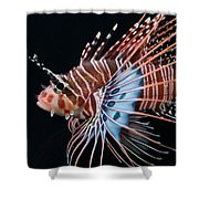 Clearfin Lionfish Shower Curtain