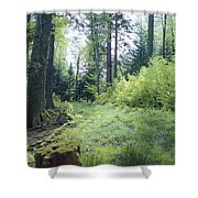 Clearing In Spring Shower Curtain