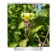 Clematis Bee-auty Shower Curtain