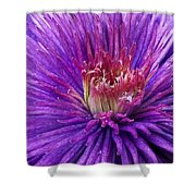 Clematis Blossom Upclose Shower Curtain