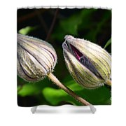 Clematis Buds Shower Curtain