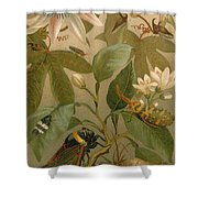 Clematis Cicada And Beetles 1894 Shower Curtain