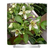 Clematis Grace Shower Curtain