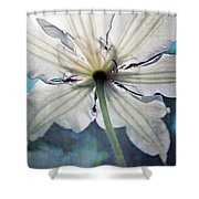 Clematis In Morning Sun Shower Curtain