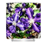 Clematis On A Stone Wall Shower Curtain