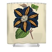 Clematis Star Of India Shower Curtain