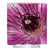 Clematis Up Close Shower Curtain