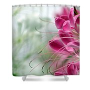 Cleome Meditation Love And Light Shower Curtain