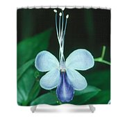 Clerodendrum 1 Shower Curtain