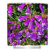 Cliff Penstemon On Watchman Overlook In Crater Lake National Park-oregon Shower Curtain