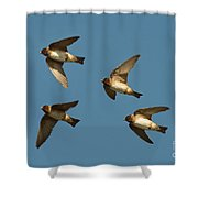 Cliff Swallows Flying Shower Curtain