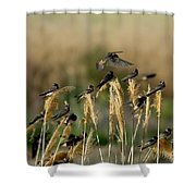 Cliff Swallows Perched On Grasses Shower Curtain