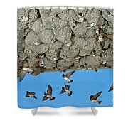Cliff Swallows Returning To Nests Shower Curtain