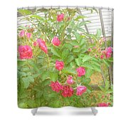 Climbing Roses Shower Curtain