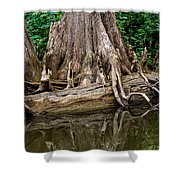 Clinging Cypress Shower Curtain