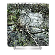 Clinging To Your Roots Shower Curtain