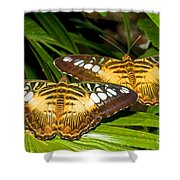Clipper Butterflies Shower Curtain