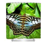 Clipper Butterfly Shower Curtain