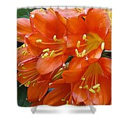 Music Please Clivia Shower Curtain