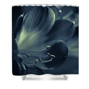 Clivia Miniata II Shower Curtain