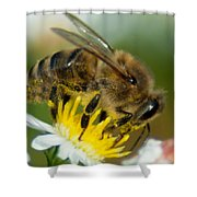 Close Encounter Of The Bee Kind Shower Curtain