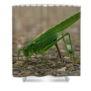Close Encounter Of The Green Kind Shower Curtain