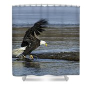 Close To Lunch Time Shower Curtain
