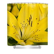 Close Up Beauty Shower Curtain