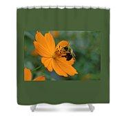 Close Up Bee Feeding On Orange Cosmos Shower Curtain