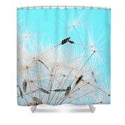 Close-up Dandelion Seeds Against Blue Shower Curtain