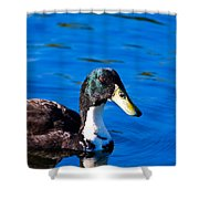 Close Up Duck Shower Curtain