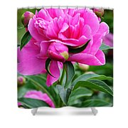 Close Up Flower Blooming Shower Curtain