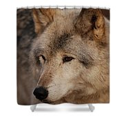 Close Up Shower Curtain