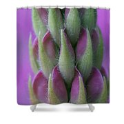 Close Up Lupin  Shower Curtain