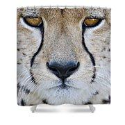 Close-up Of A Cheetah Acinonyx Jubatus Shower Curtain