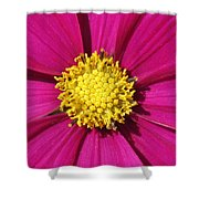 Close Up Of A Cosmos Flower Shower Curtain