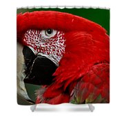 Close Up Of A Gorgeous  Green Winged Macaw Parrot. Shower Curtain