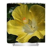 Close Up Of A Hibiscus...   # Shower Curtain