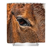 Close Up Of A Horse Eye Shower Curtain by Paul Ward