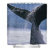 Close Up Of A Humpback Whale Fluke In Shower Curtain