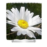 Close Up Of A Margarite Daisy Flower Shower Curtain